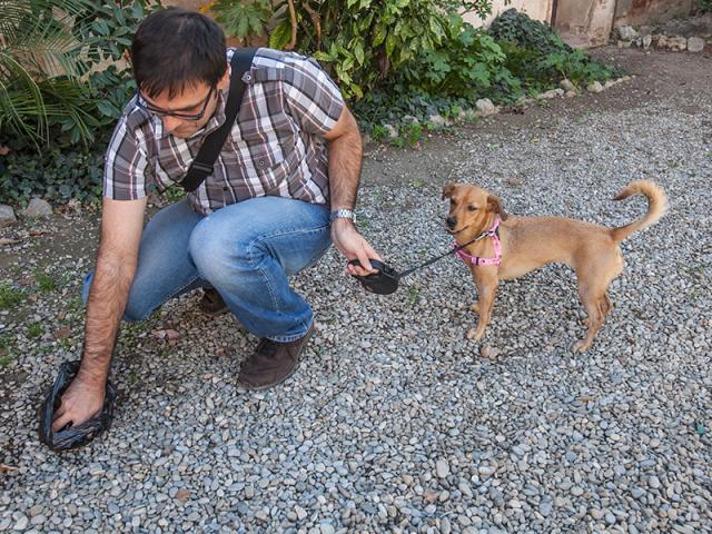 caca gos recollir viladecans neteja caques bosses regal