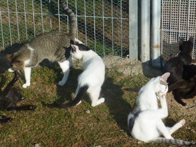 recollida gats viladecans