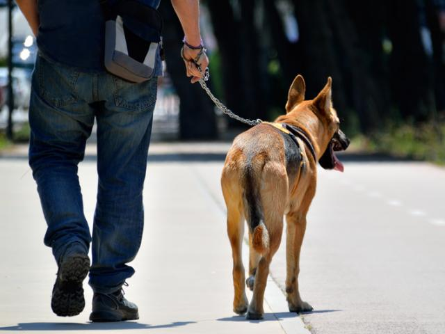 gossos perillosos viladecans obligacions