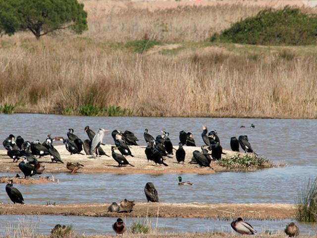 remolar delta llobregat viladecans aiguamolls