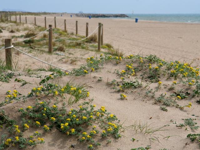 platja viladecans valors naturals platges verges playas virgenes